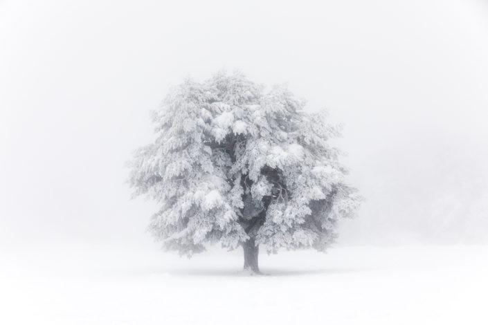 Serie-Entre el frío y la savia