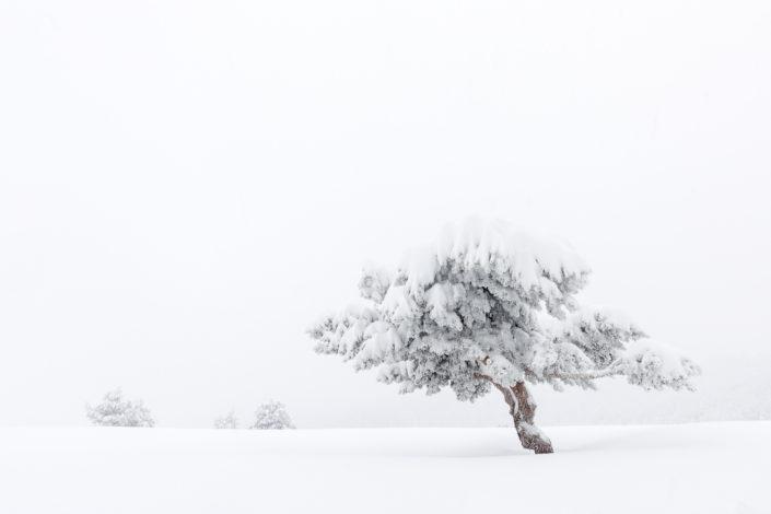 Serie - Entre el frío y la savia